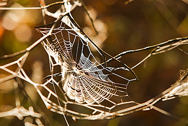 Morning dew on a spiders web near Ambleside, Lake District, Cumbria, England, United Kingdom, Europe