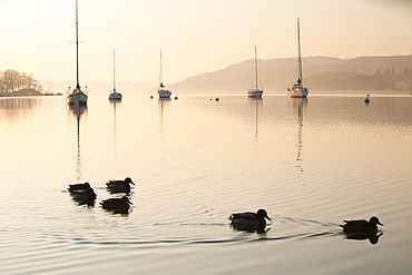 Sailing boats at dawn on Lake Windermere at Waterhead, Ambleside in the Lake District National Park, Cumbria, England, United Kingdom, Europe