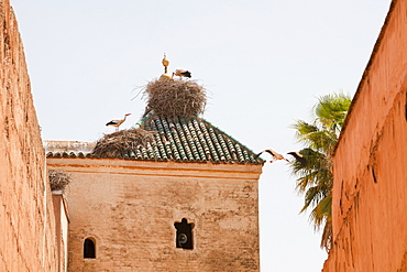 White storks (Ciconia ciconia) nest on the roof of the El Badi Palace in Marrakech, Morocco, North Africa, Africa