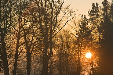 Sunrise in woodland on the outskirts of Loughborough, Leicestershire, England, United Kingdom, Europe
