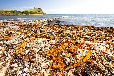Seaweed washed up on the beach after a storm at Kimmeridge Bay, Jurassic Coast, UNESCO World Heritage Site, Dorset, England, United Kingdom, Europe