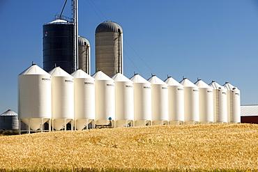 A field of wheat with grain silos, Alberta, Canada, North America