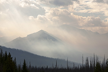 Boreal Forest burnt and a forest fire raging on Octopus Mountain in Kootenay National Park, UNESCO World Heritage Site, Alberta, Canadian Rockies, Canada, North America
