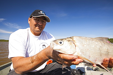 A fish caught in Lake Athabasca by Robert Grandjamber, who lives in Fort Chipewyan, a First Nation community downstream of the tar sands industry, Alberta, Canada, North America