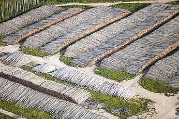 Boreal forest trees clear felled to make way for a new tar sands mine north of Fort McMurray, Alberta, Canada, North America - 911-8824