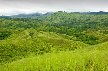 Deforestation of rainforest on Fiji, Pacific
