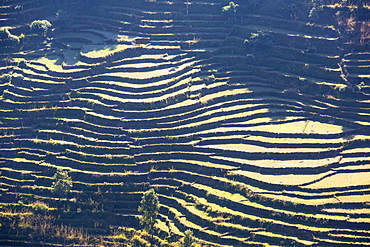 Subsistence farming in the Annapurna Himalayas in Nepal, Asia