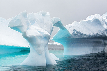 Icebergs oof Curverville Island on the Antarctic Peninsular, which is one of the fastest warming places on the planet.