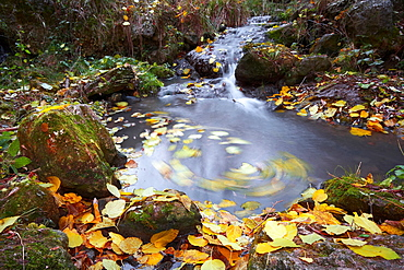 Autumn Dance. Nature, Moldova, landscape, autumn, Green,  Grass, trees, tree, water, River, gold