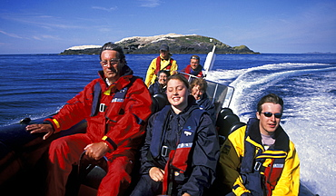 Dale Sea Safari wildlife boat trip, Grassholm, West Wales, UK     (rr)