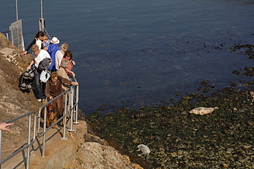 Group of people watching seals from jetty, Martins Haven, Marloes, Pembrokeshire, Wales, UK, Europe