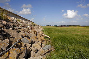 Seawall, saltmarsh, Goldcliff, Gwent Levels, Newport, Wales, UK, Europe