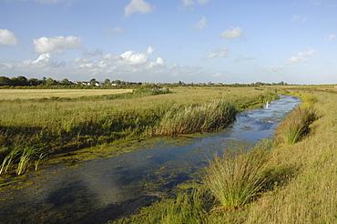 Mute swan Cygnus olor Newport Wetlands National Nature Reserve, Newport, Wales, UK, Europe