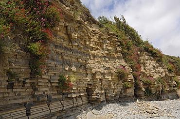 Blue Lias rocks, cliff, Lavernock Point, Vale of Glamorgan, Wales, UK, Europe