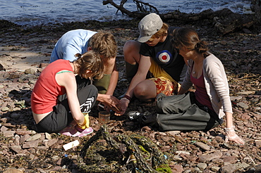 A level students doing a sandhopper survey, Castle Bay, Dale, Pembrokeshire, Wales, UK, Europe