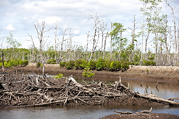 Pond intended for shrimp farm although non-productive in vast area of devastated mangroves, Balikpapan Bay, East Kalimantan, Borneo, Indonesia, Southeast Asia, Asia