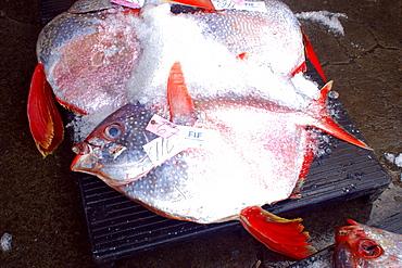 Opah (Lampris regius) at fish auction, Honolulu, Oahu, Hawaii, United States of America, Pacific