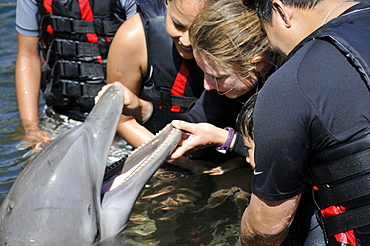 Trainer examines mouth of bottlenose dolphin (Tursiops truncatus), Oahu, Hawaii, United States of America, Pacific