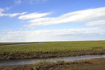 Open grassland, Wetland conservation area, Parque Nacional da Lagoa do Peixe, Mostardas, Rio Grande do Sul, Brazil, South America