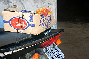 Chicken in a box carried by a motorcycle, Sangue, Maranhao, Brazil, South America