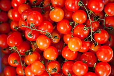 Tomatoes for sale at the Sunday morning market, Pollenca, Tramuntana, Mallorca, Balearic Islands, Spain, Europe
