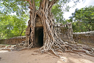 Ta Som, giant roots overgrowing on the gopura (entrance gate), Angkor, UNESCO World Heritage Site, Siem Reap, Cambodia, Indochina, Southeast Asia, Asia
