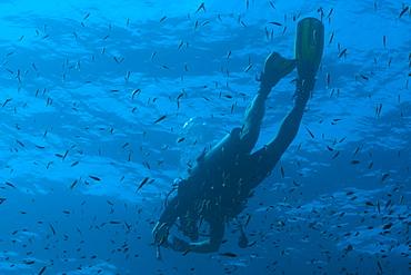 Scuba diver underwater, Southern Thailand, Andaman Sea, Indian Ocean, Southeast Asia, Asia