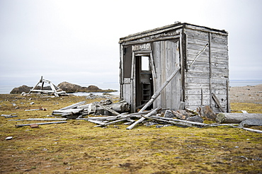 Trapers Cabin. fuglehuken (bird), Svalbard, Norway