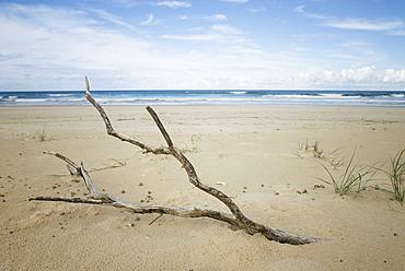 Driftwood on the beach. South West Rocks, NSW, Australia