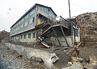 Abandoned Hotel near Wild Common Murres (Uria aalge) colony, Tyuleniy Island (Bering Sea), Russia, Asia