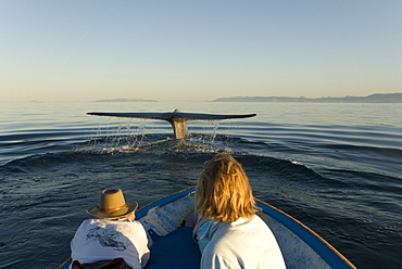 Blue whale (Balaenoptera musculus). A blue whale tail enthralls watching tourists. Gulf of California.