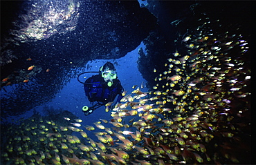 diver in the red sea with some red soft coral. Red Sea