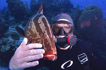 Diver with local tame grouper in Turks and Caicos, West Indies, Caribbean, Central America