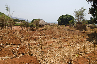 Dry crops in a village in Africa, Talpia, Zambia, Africa