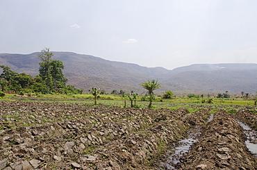 Crops near Lake Tanganyika, Talpia, Zambia, Africa