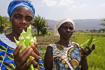 Local viillagers collect okra crop growing near Talpia Village on Lake Tanganyika, Zambia, Africa