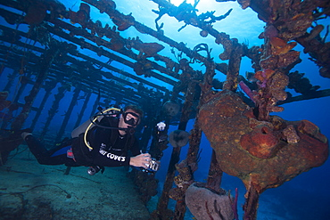 Wreck diving on the James Bond bomber wreck in Bahamas, West Indies, Central America