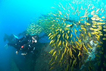 Diver swimming amongst the schooling fish on a ship wreck in Nosy Be, Madagascar, Indian Ocean, Africa