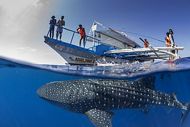 Whale shark (Rhincodon typus) below a banca boat in Honda Bay, Palawan, The Philippines, Southeast Asia, Asia