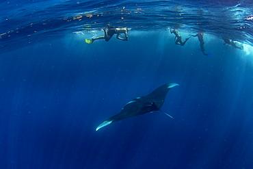 Snorkellers with an oceanic manta ray (Manta birostris) feeding near the surface, Honda Bay, Palawan, The Philippines, Southeast Asia, Asia