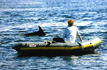 Rower watching friendly bottlenose dolphin.  Hebrides, Scotland.