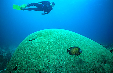 Giant Brain Coral and diver, Tobago.