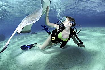 Bikini Diver with Sting rays, Stingray City Sandbar, Grand Cayman Island, Cayman Islands, Caribbean