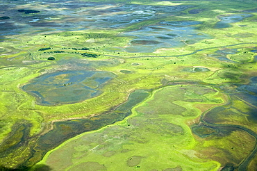 Aerial view of flooded areas of the Rupununi, Guyana, South America