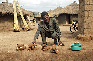 An IDP camp (internally displaced people) in Te-Tugu district of Northern Uganda has been created to accommodate the mass of Ugandan refugees fleeing the LRA (Lords Resistance Army) who are fighting the Ugandan government and its people.  With all attempts to be self-sufficient in these camps, Yams are an important vegetable for survival. The tubers can be stored up to six months without refrigeration, which makes them a valuable resource for the yearly period of food scarcity at the beginning of the wet season. Te-Tugu, Uganda, East Africa