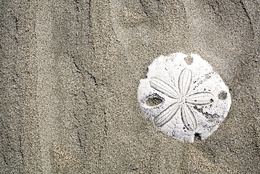 Patterns in the sand dunes (with sand dollar) of Isla Magdalena on the Pacific side of the Baja Peninsula, Mexico.