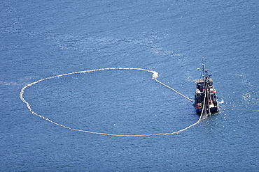 Aerial view of the purse-seiner fishery for salmon off Point Augustus, Chichagof Island, Southeast Alaska, USA. Closing the purse.   (RR)