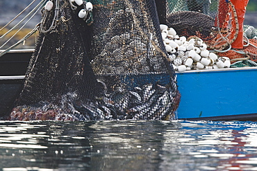A close up view of a purse seine salmon set in Chatham Strait, Southeast Alaska, USA. Pacific ocean. No model or property releases.