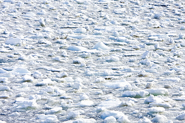 Brash ice detail in and around the Antarctic Peninsula during the summer months. More icebergs are being created as global warming is causing the breakup of major ice shelves and glaciers.