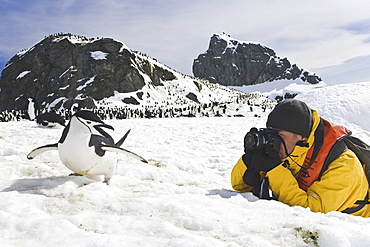 Chinstrap penguin (Pygoscelis antarctica) colony near Point Wild on Elephant Island in the South Shetland Islands